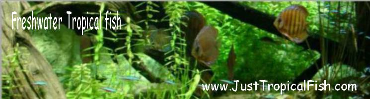 General Tropical Fish Information header